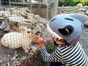 pettingfarm